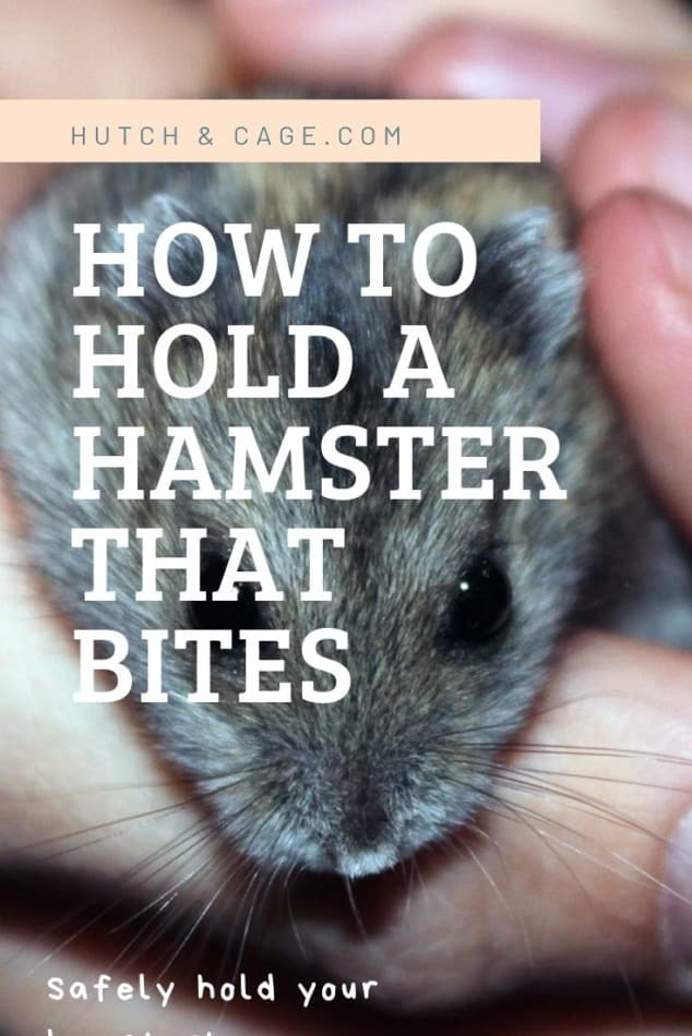 pinterest image: how to hold a hamster