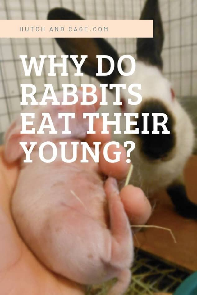 Why Do Rabbits Eat Their Young? 3 Ways To Prevent It From Happening 1