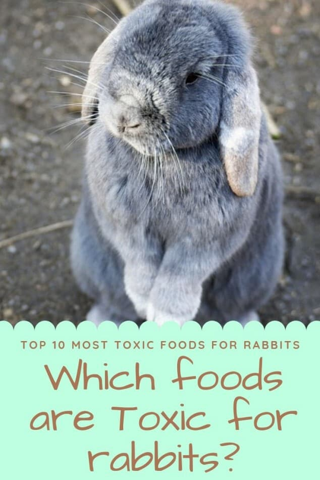 which foods are toxic for rabbits Pinterest image
