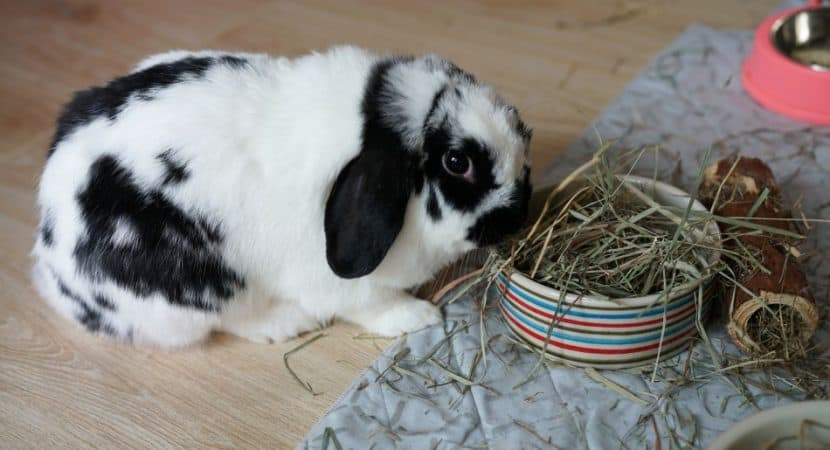 image of a rabbit eating hay