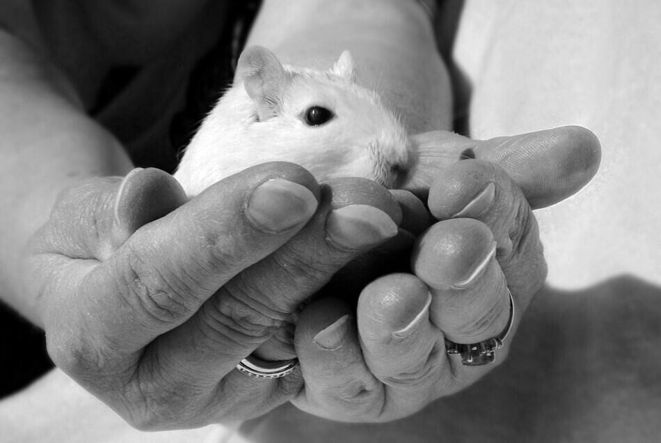 someone holding a gerbil