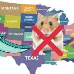 hamsters are illegal in california
