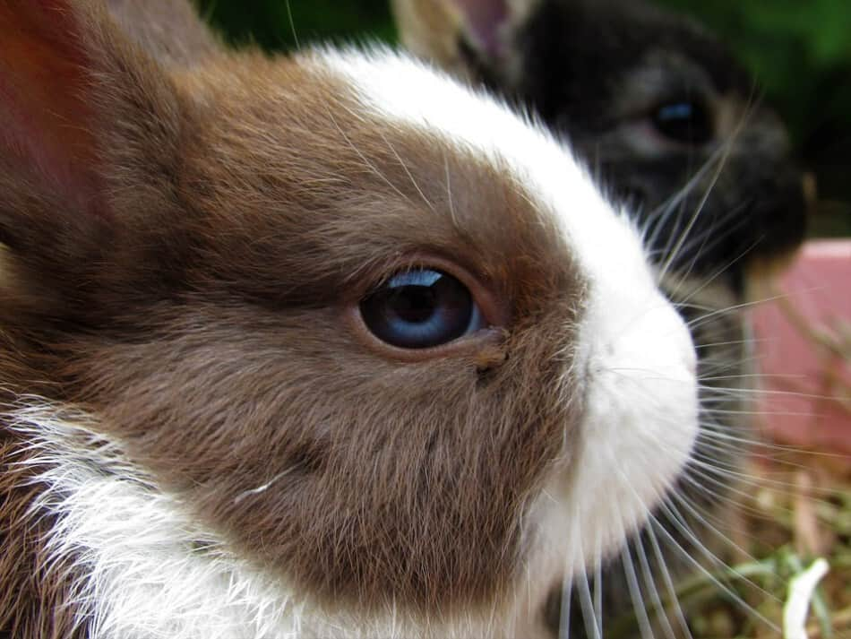 image of a cute pet rabbit