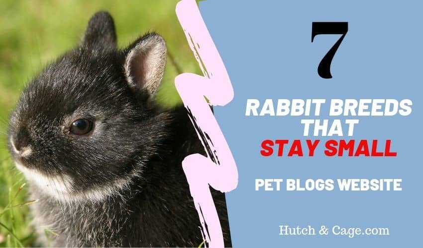 7 rabbit breeds that stay small