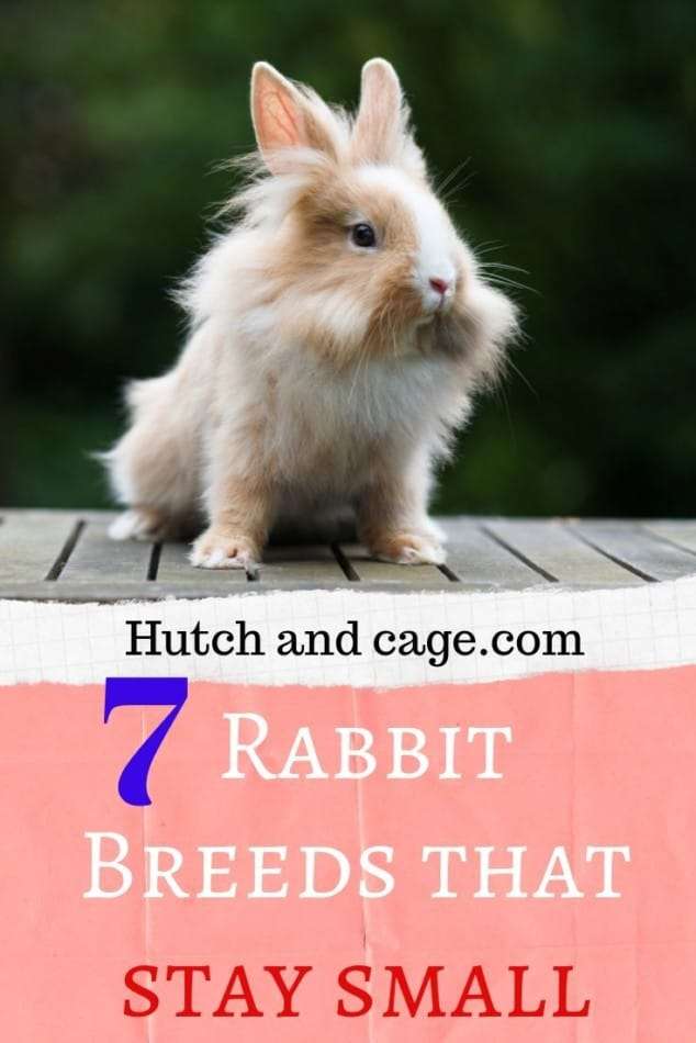 7 rabbits breeds that stay small