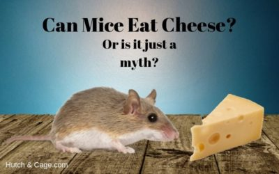 mice & cheese