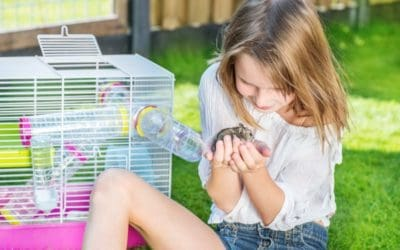 hamster with child