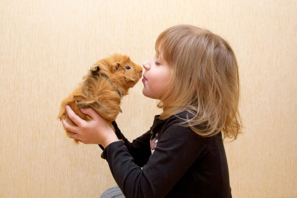 kid and guinea pig