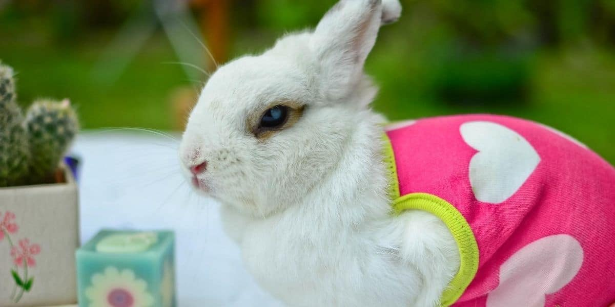 cute rabbit breeds