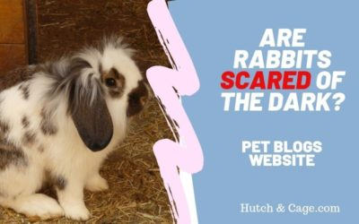 are rabbits scared of the dark