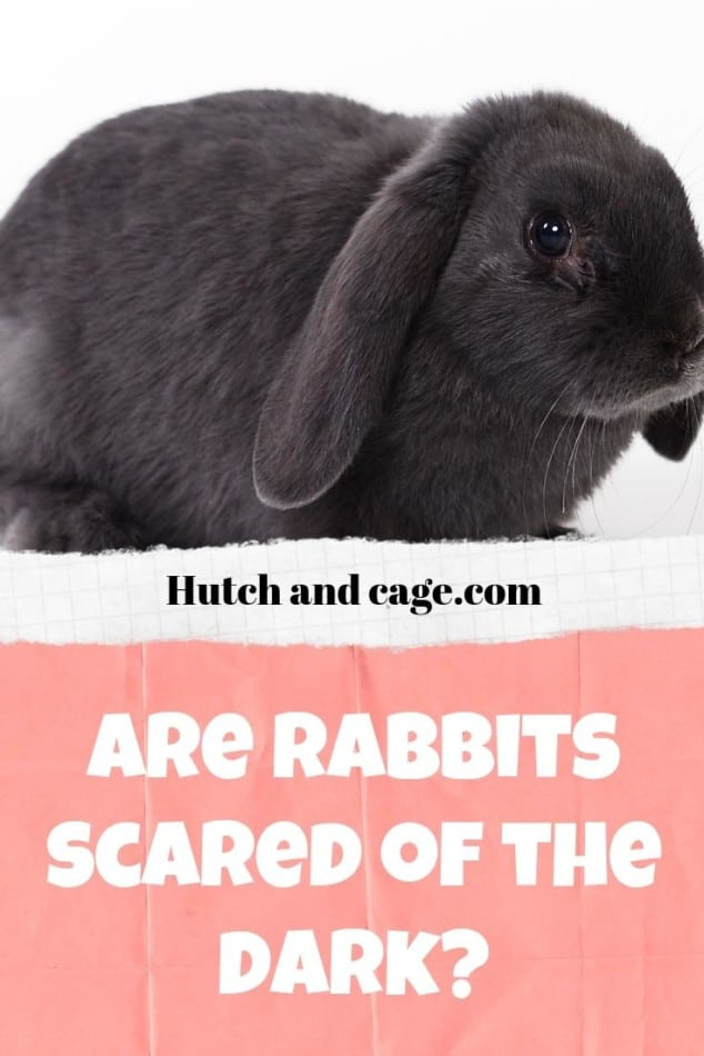 are rabbits scared of the dark?