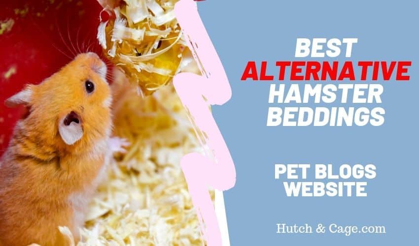 best alternative hamster bedding