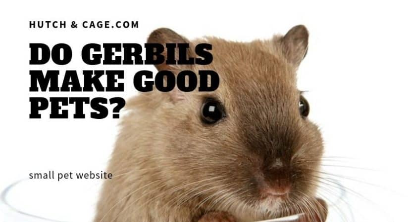 Do Gerbils Make Good Pets? Are They Good Pets For Children
