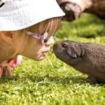 guinea pig and child