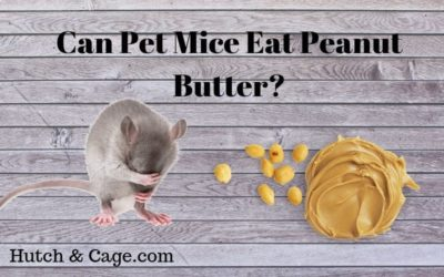 pet mice and peanut butter