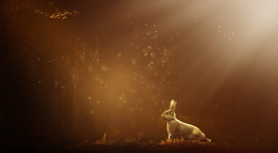rabbit at night