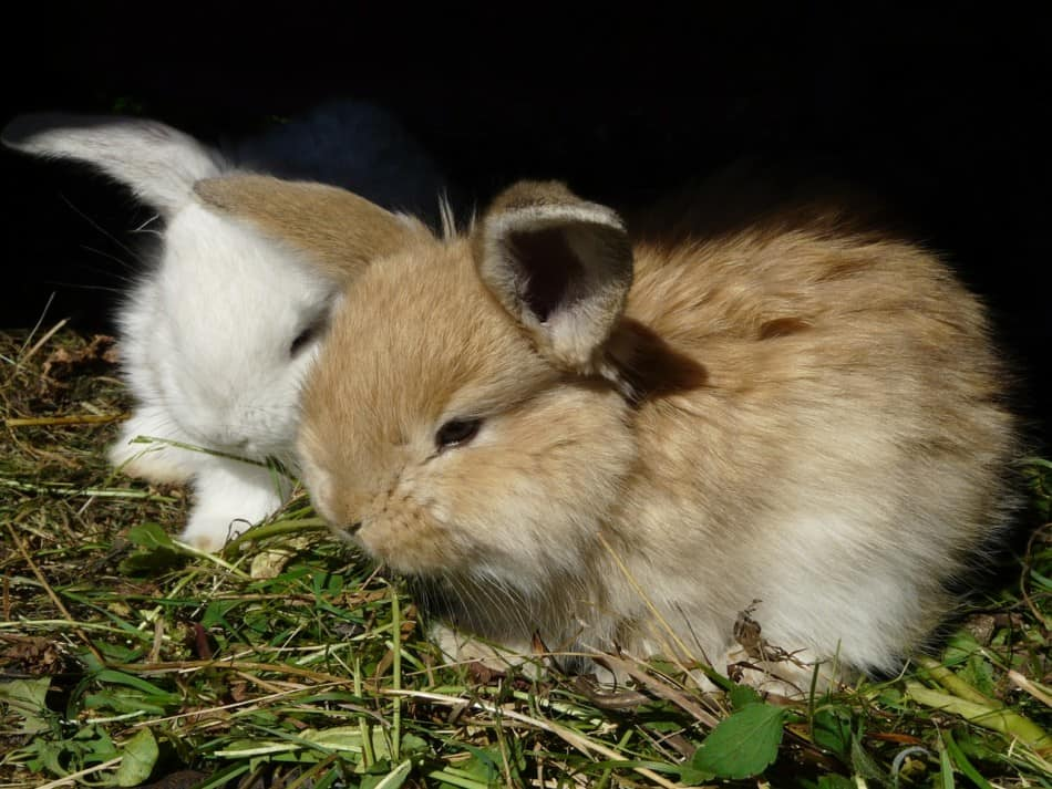 two young bunnies