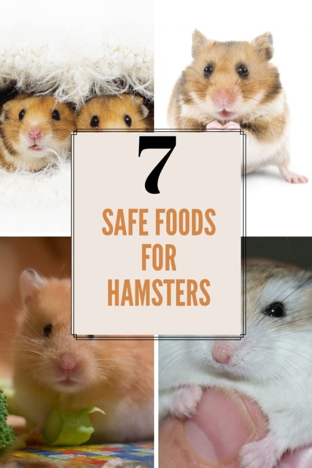 Can Dwarf Hamsters Eat Bananas? Plus 7 Safe Foods For Dwarf Hamsters 1