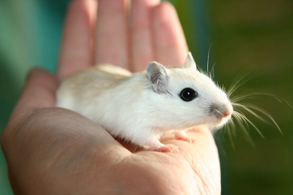 holding a pet mouse