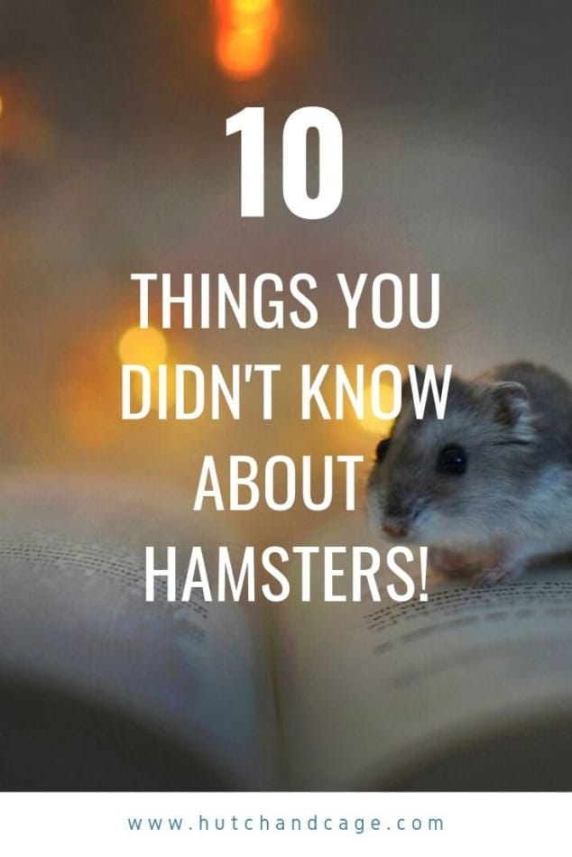 10 hamster facts