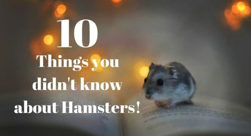 hamster on a book