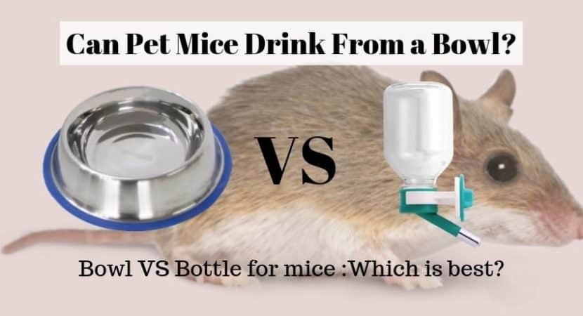 mice and water bowl