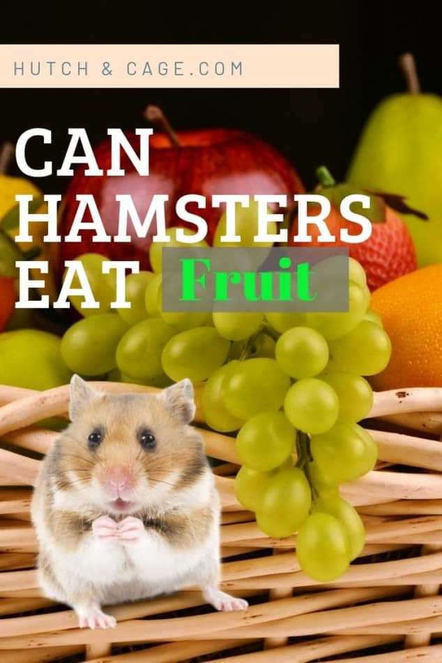 Can Hamsters Eat Fruit? (Which Ones To Avoid) 1