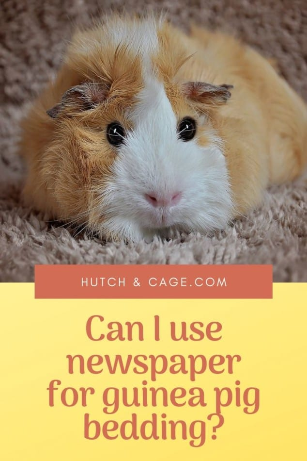 pinterest pin-can i use newspaper for guinea pig bedding