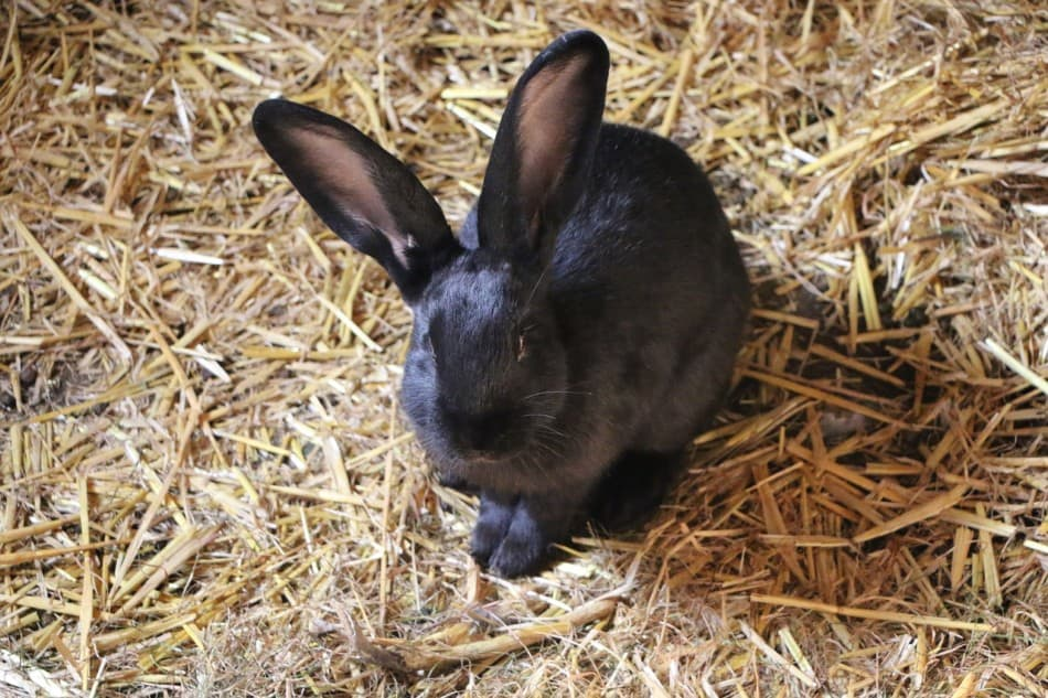 rabbit sat on straw