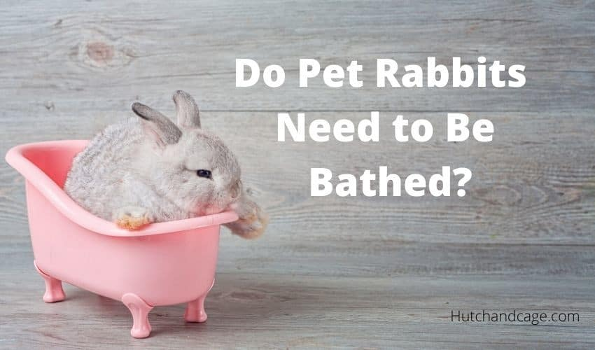 rabbit in a bath