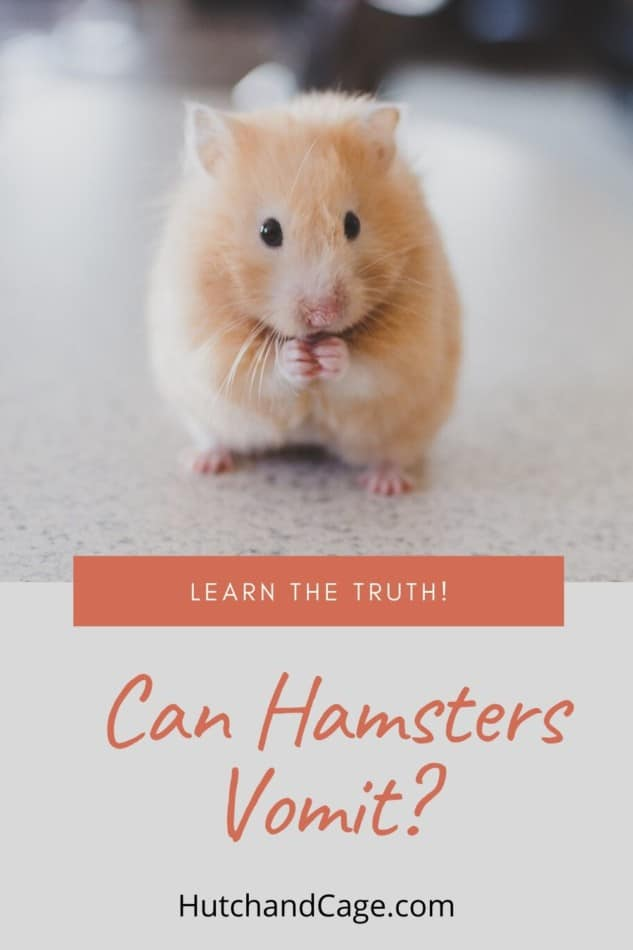 can hamsters vomit?