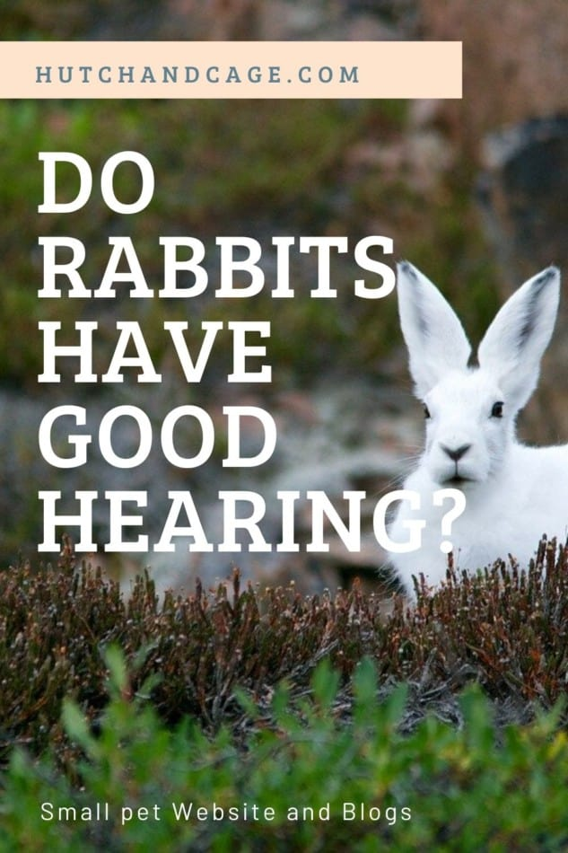 do rabbits have good hearing