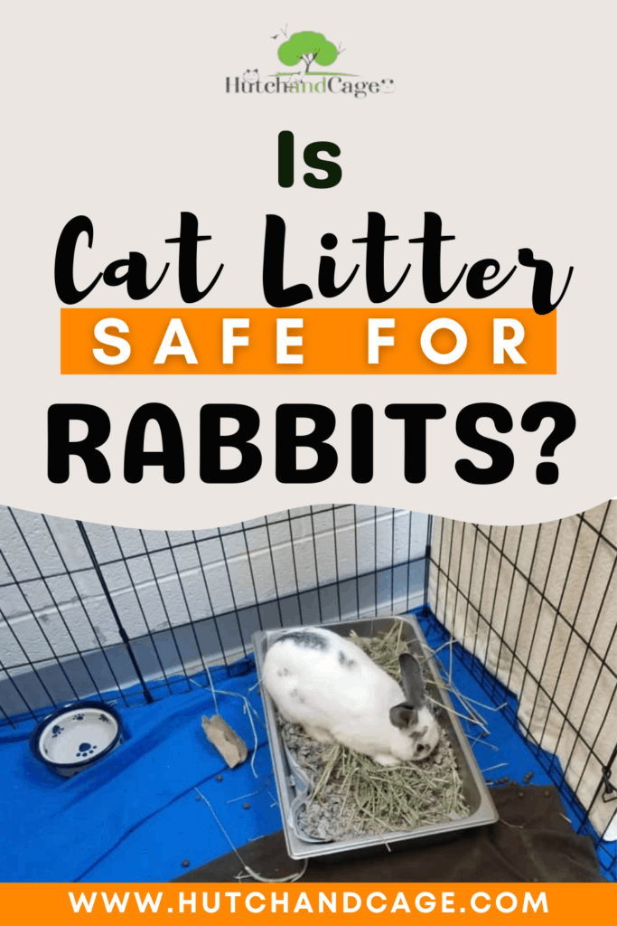 Is Cat Litter Safe for Rabbits