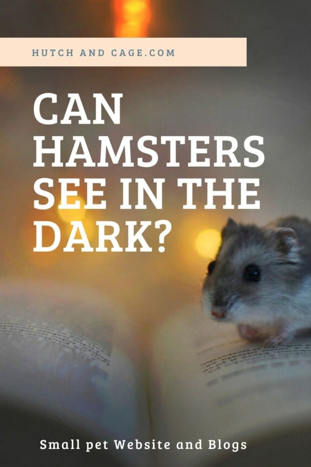 can hamsters see in the dark?