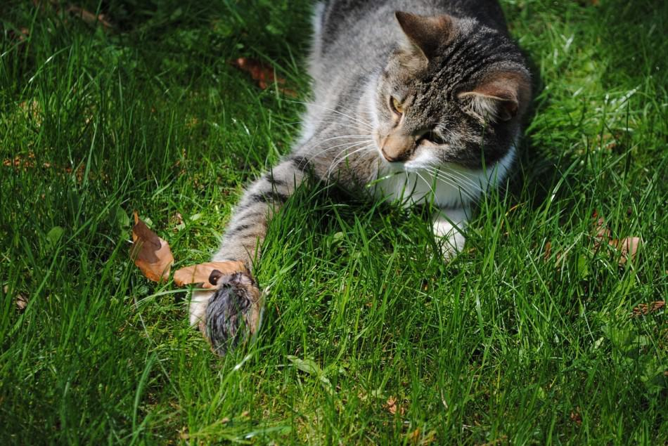 Do Pet Mice Attract Wild Mice Into Your Home? 2