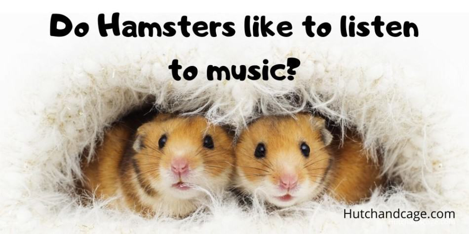hamster listening to music