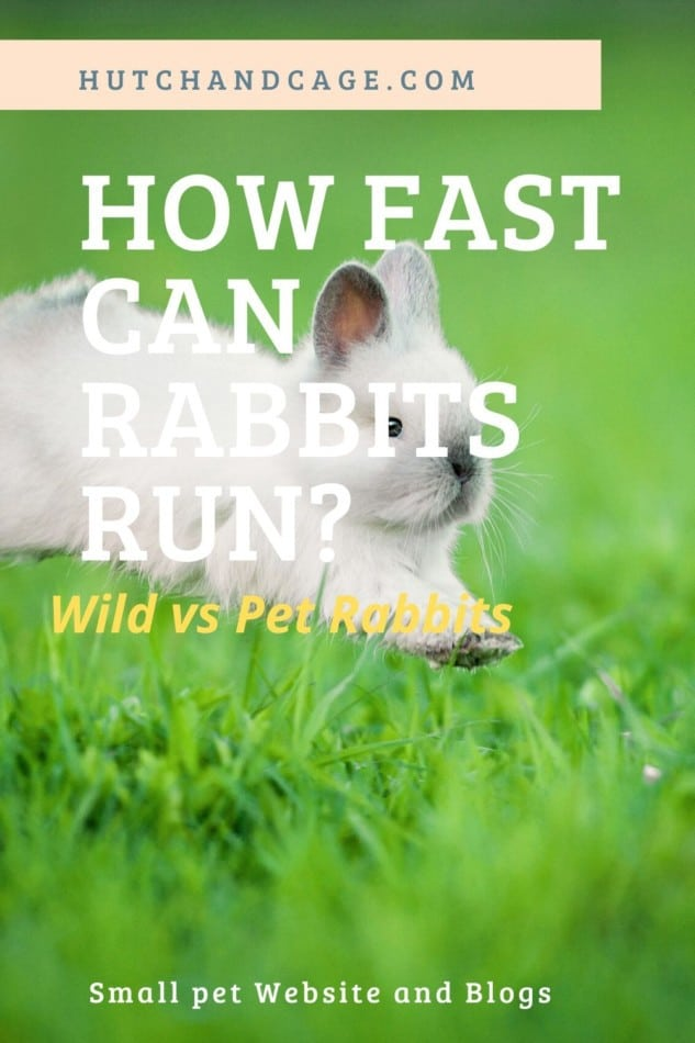 How Fast Can Rabbits Run? Wild & Pet Rabbits Speeds 1