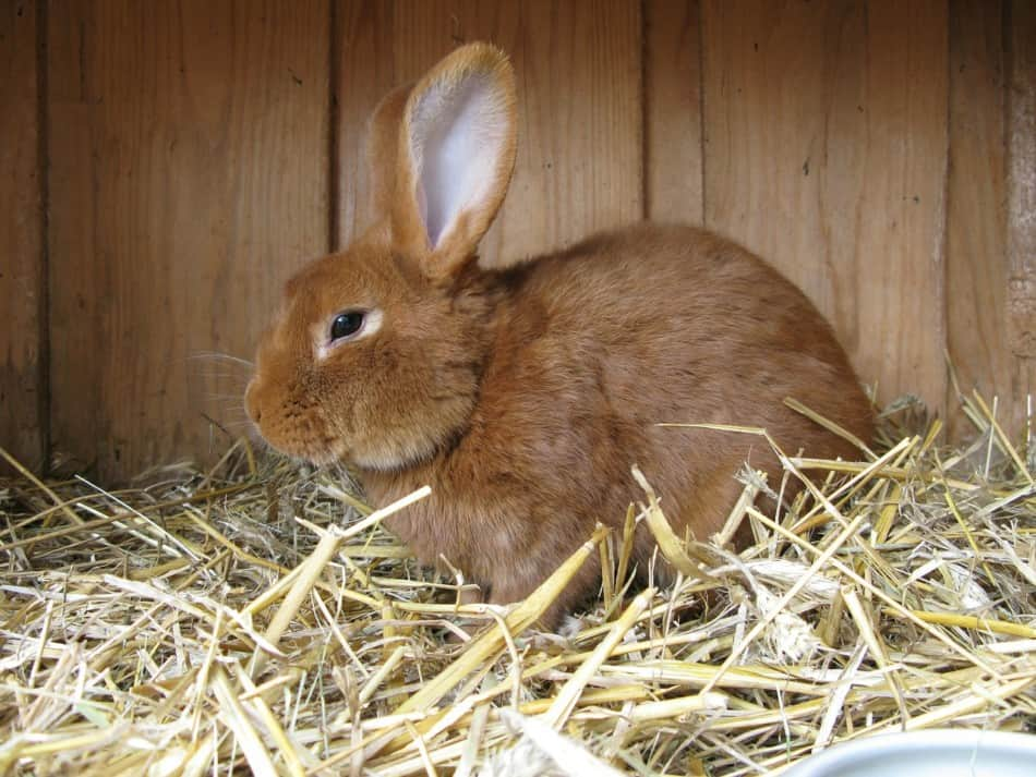 Is Cat Litter Safe For Rabbits? What're The Dangers? 1