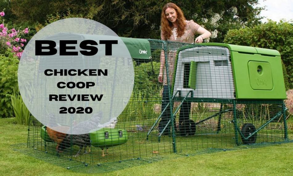 best chicken coop review 2020