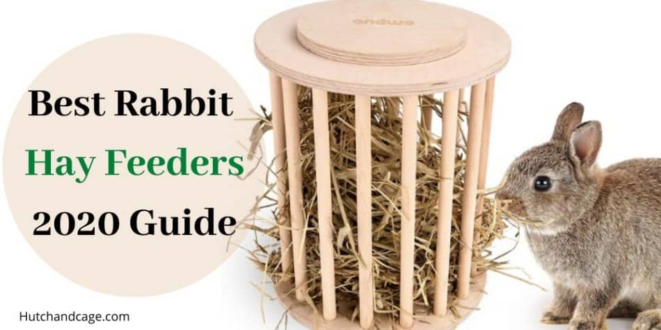Best Rabbit hay feeders
