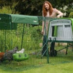 Eglu Cube is a large chicken coop