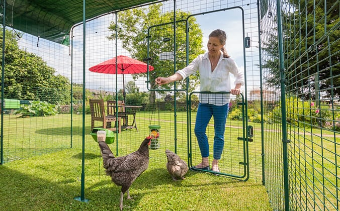 Best Chicken Coop Review - Top 5 chicken coops 2020 8