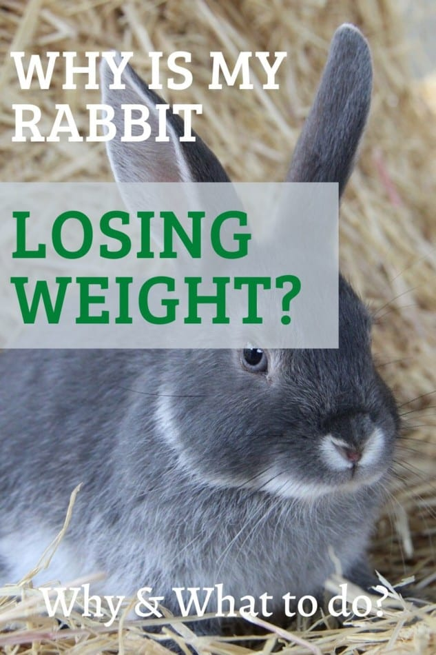 why is my rabbit losing weight