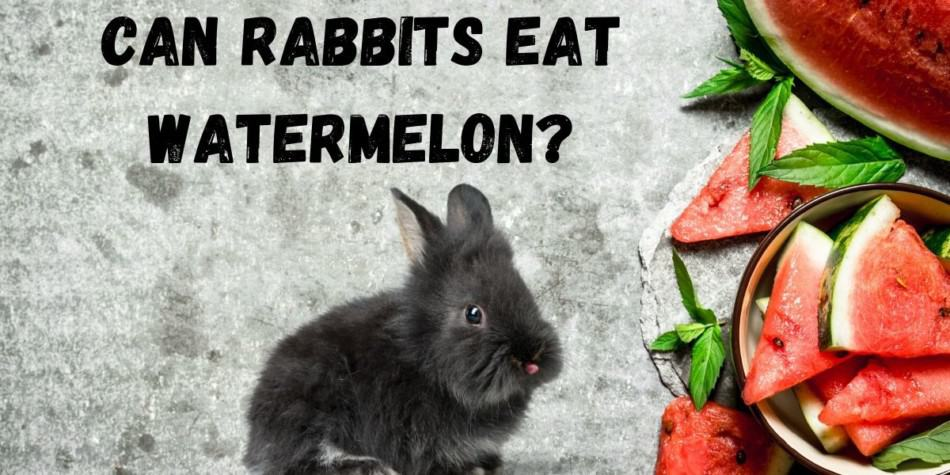 RABBIT AND WATER MELON