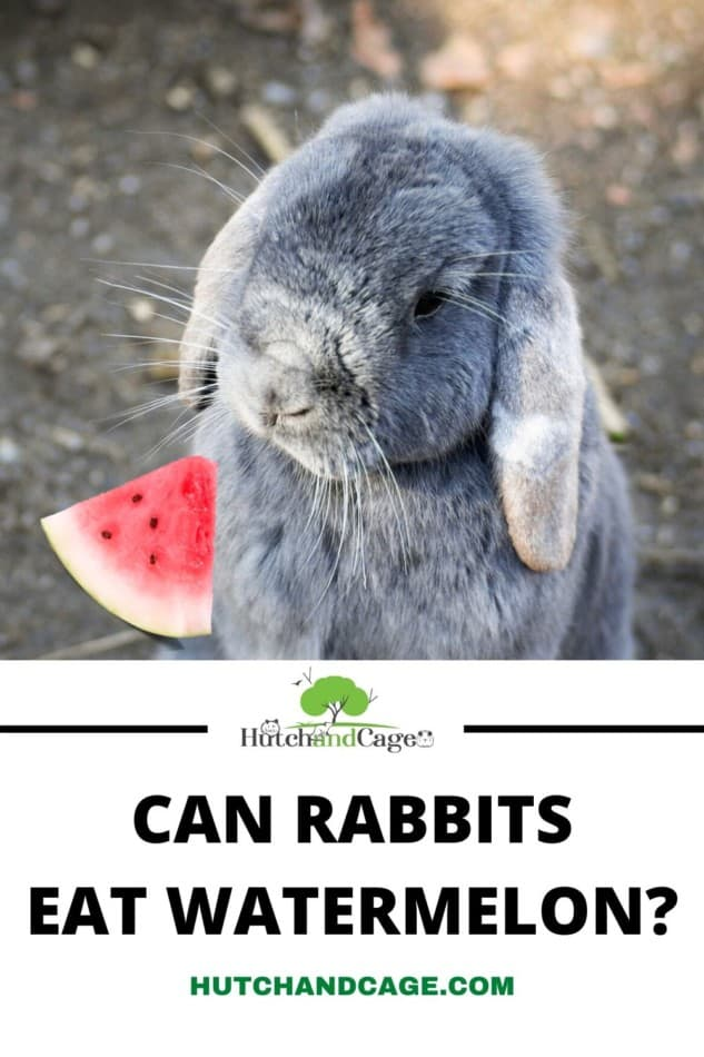 RABBIT WITH WATERMELON