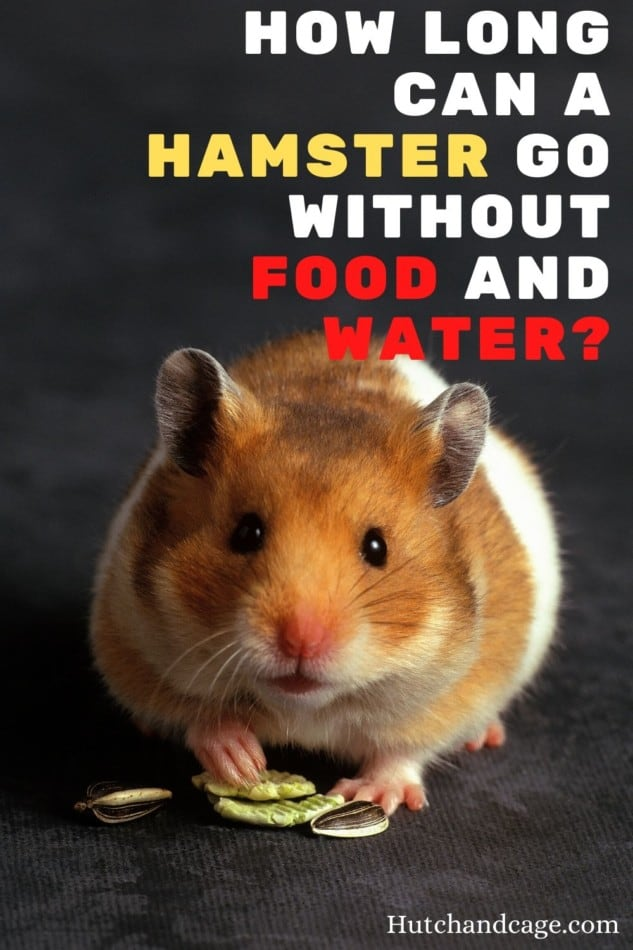 How Long Can A Hamster Go Without Food and Water
