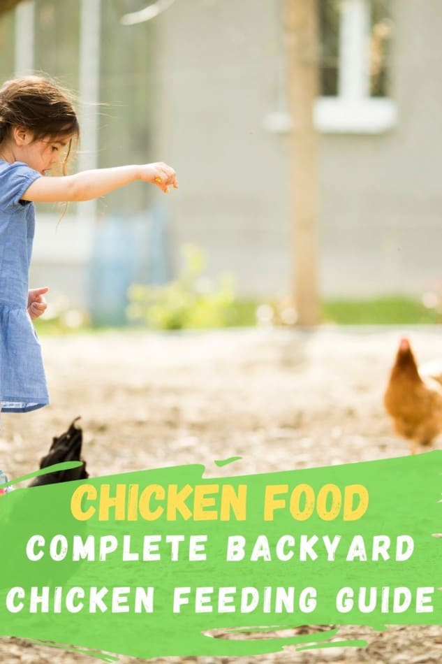 Chicken Food: Complete Guide to feeding Backyard Chickens 1