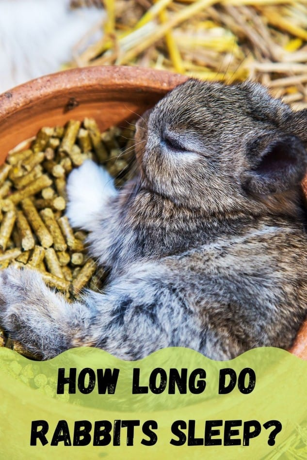 How Long Do Rabbits Sleep? 2