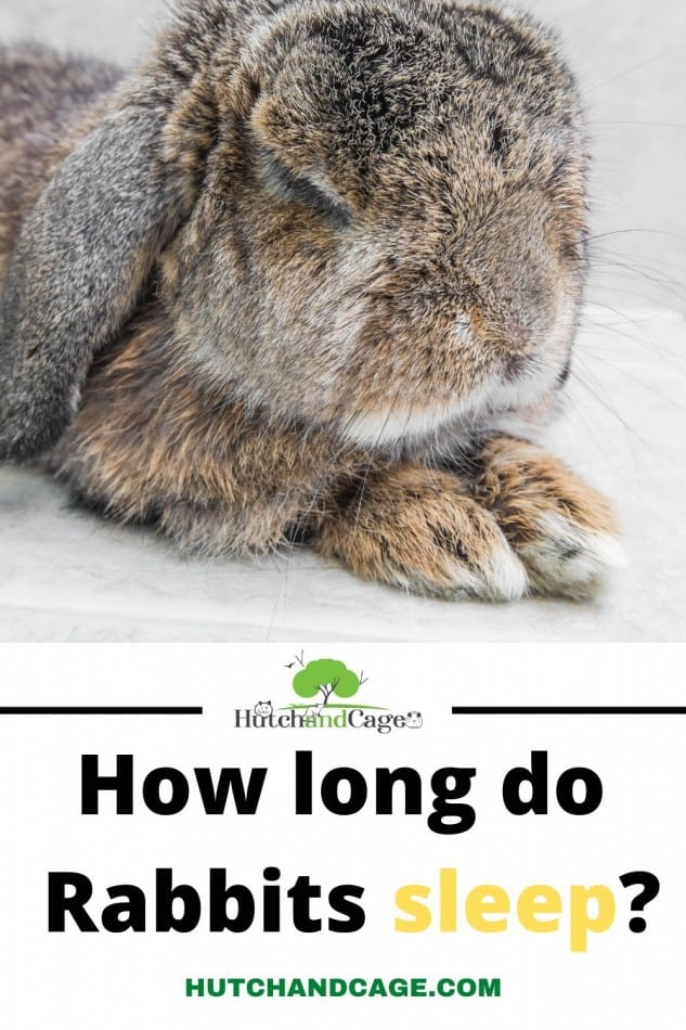 how long do rabbits sleep
