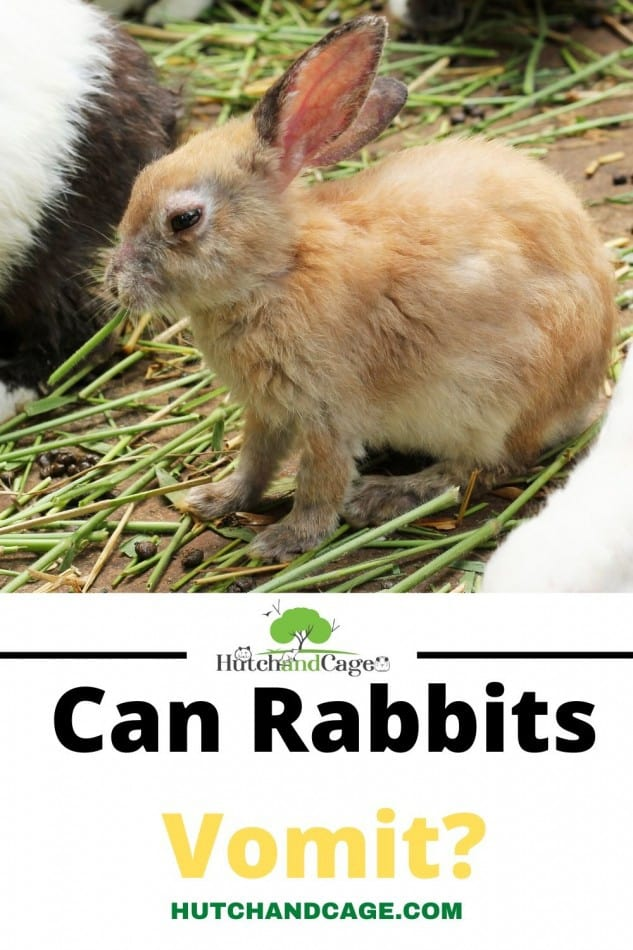 Can rabbits Vomit